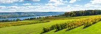 Glenora Vineyard, Seneca Lake, Finger Lakes, New York State Fine Art Print