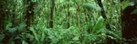 Monteverde Cloud Forest Reserve, Costa Rica Fine Art Print