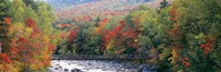 White Mountain National Forest, NH Fine Art Print