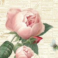 Roses in Paris V Fine Art Print