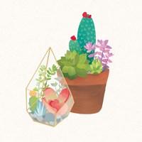 Succulent Garden I Framed Print