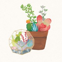 Succulent Garden III Framed Print
