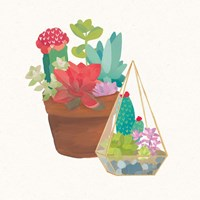 Succulent Garden IV Framed Print