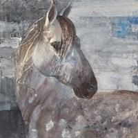 Appaloosa Fine Art Print