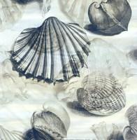 Shell engraving 1 Fine Art Print