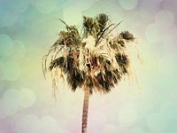 Palm Trees III Framed Print