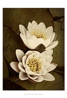 Lily Pad Duo Fine Art Print