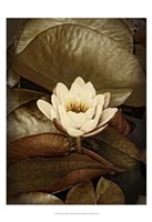 Lily Pad Single Framed Print
