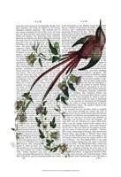 Passion Flower Bird Fine Art Print