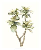 Tropical Watercolor Leaves III Framed Print