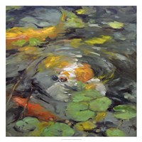 Golden Koi Framed Print