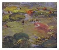 Koi & Lilies I Framed Print