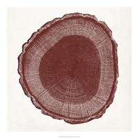 Tree Ring I Framed Print