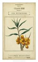 Linnaean Botany III Framed Print