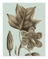 Flowering Trees I Framed Print