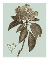 Flowering Trees V Framed Print