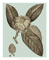 Flowering Trees VI Framed Print
