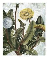 Dandelion Patina I Framed Print
