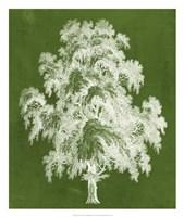 Modern Arbor II Framed Print
