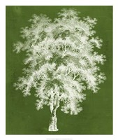 Modern Arbor III Framed Print