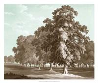 Serene Trees II Framed Print