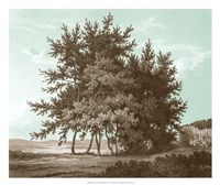 Serene Trees IV Framed Print