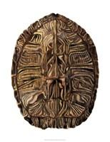Tortoise Shell Detail II Framed Print