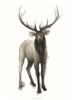 Majestic Wildlife II Fine Art Print