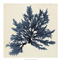 Coastal Seaweed IX Framed Print