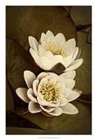 Lily Pad Duo I Framed Print