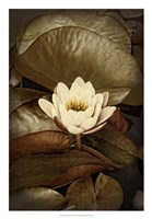 Lily Pad Duo II Framed Print