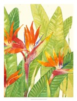 Watercolor Tropical Flowers IV Fine Art Print