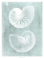 Nautilus on Spa I Framed Print