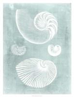 Nautilus on Spa II Framed Print