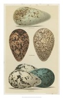 Antique Bird Egg Study I Fine Art Print