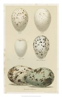 Antique Bird Egg Study II Fine Art Print