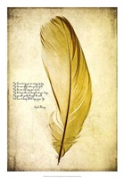 Feather in Color IV Framed Print