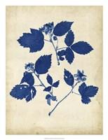 Indigo Leaf Study VI Framed Print