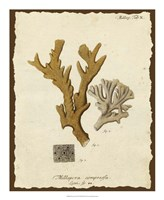 Natura Coral I Fine Art Print