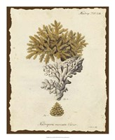 Natura Coral III Fine Art Print