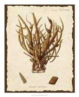 Natura Coral V Framed Print