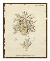 Natura Coral VI Fine Art Print