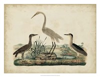 Great White Heron & Night Heron Framed Print