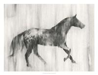 Appaloosa Study I Framed Print