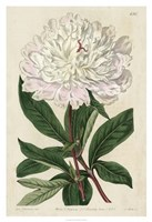 Imperial Floral I Framed Print