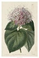 Imperial Floral IV Framed Print
