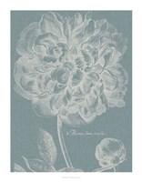 Graceful Peony I Framed Print