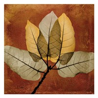 Golden Ficus Burkey Framed Print