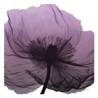 Poppy Purple Framed Print