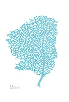 Sea Fan Fine Art Print